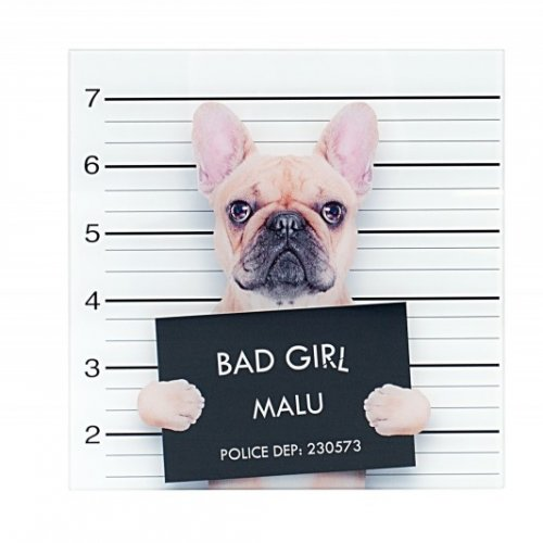 Wandbild - Bad Girl - Franz. Bulldogge
