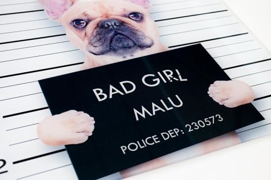 Wandbild Picture Bulldogge Bad Girl